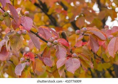 Red Autumn Trees Leaves