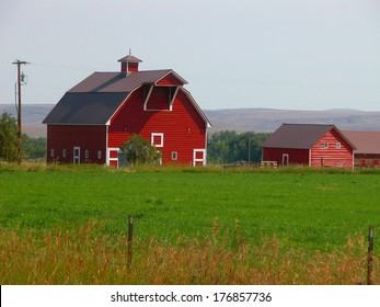 A red barn provides a picturesque background on an Oregon farm.