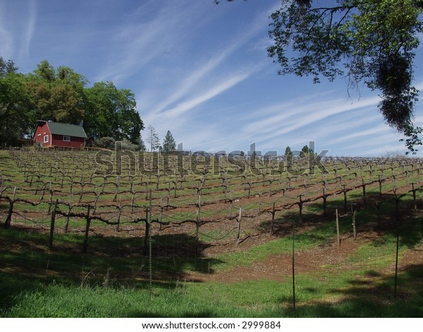The Red barn of the vineyards