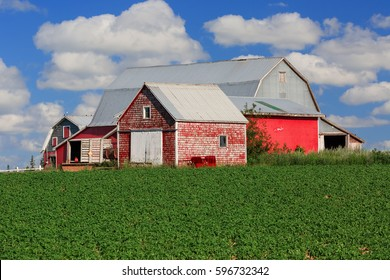 Red barns on the farm in rural America.
