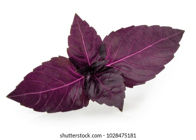 Red basil leaves isolated