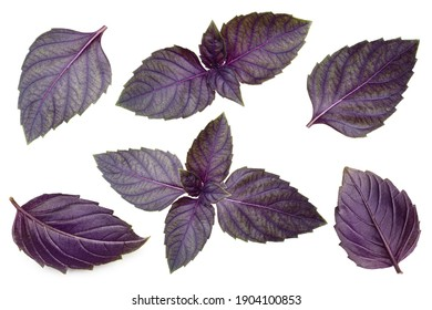 Red basil leaves isolated on white background