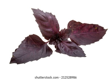 Red basil leaves isolated on white