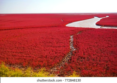 Red beach is located in Liaoning, the northeast China. This is the biggest wetland featuring the red plant of Suaeda salsa in the world.