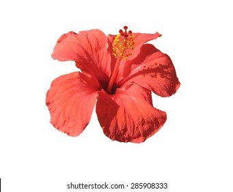 red beautiful flower on a white background