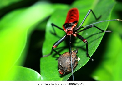 Red beetle on leaf