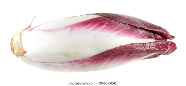 Red Belgian endive or witloof isolated on white background