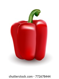 Red bell pepper. Paprika. illustration executed in a realistic manner.
