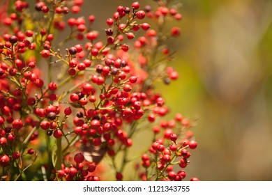 Red berries bokeh abstract background