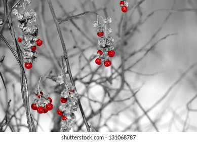Red berries grapes with a black and white background