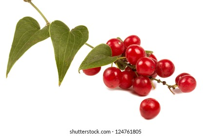 Red berries  isolated on white closeup shot