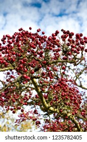 Red berries on an autumn bush on a sunny day