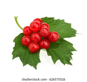 Red berries of Viburnum (arrow wood), isolated on white
