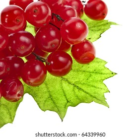 red berries of Viburnum (arrow wood), isolate on white