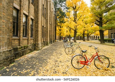 red bicycle with falling yellow leaves on the ground in autumn taken at Tokyo University on 4 December 2016
