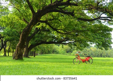 Red bicycle on green grass under Big tree