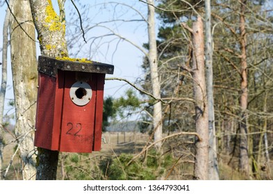 Red bird house in a tree by spring season