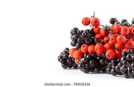 Red and black berry isolated on white with christmas bag