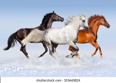 Red black and white horse run gallop at snow field