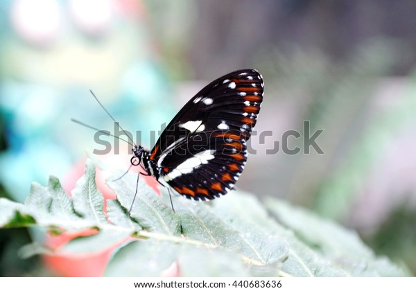 Red and black winged butterfly perched on a fern leaf