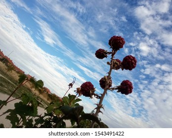 Red blackberries on a blue sky.