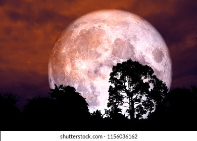 red blood moon back silhouette tree night red sky , Elements of this image furnished by NASA