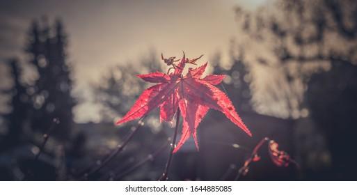 Rote Blüte einer Gartenpflanze in der Natur mit unscharfem Hintergrund.