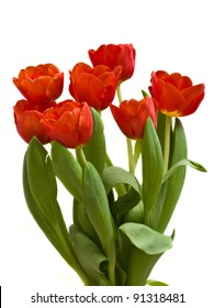 red blooming tulips isolated on white