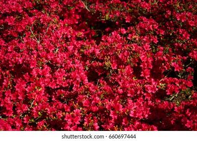 Red blossom bush structure