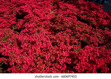 Red blossom bush structure