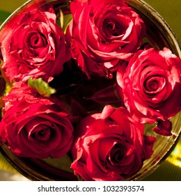 Red blossom roses background as symbol of wedding, love and romance
