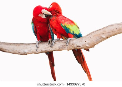 Red and Blue macaw isolated on white background