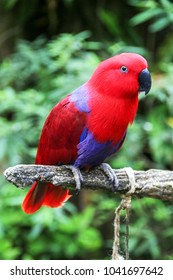 Red and blue Parrot in Bogor Safari Park, West Java, Indonesia.
