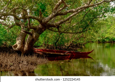 A red boat parked on a mangrove tree. Mangrove Forest in Gubat, Sorsogon, Philippines.