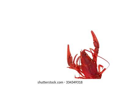 red boiled crawfish isolated on white background