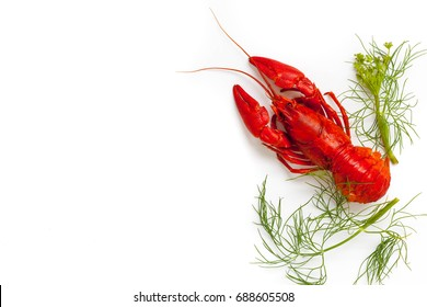 Red boiled crayfish on the white background. Copy space, card