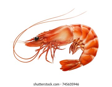 Red boiled prawn or tiger shrimp isolated on white background as package design element