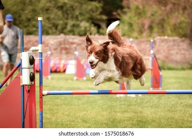 Red border collie is jumping over the hurdles. Amazing day on czech agility competition.