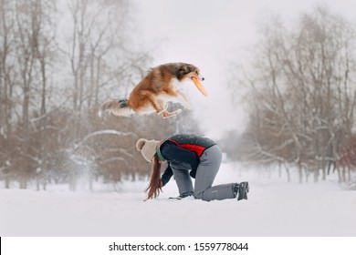 Red border collie jumps over owner with frisbee disc on a winter walk