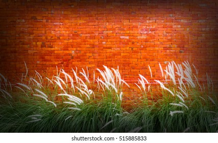 Red brick wall background with grass flower