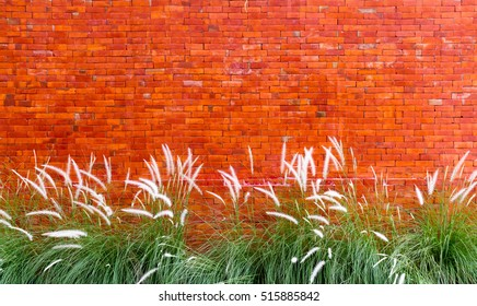 Red brick wall background with grass flower.