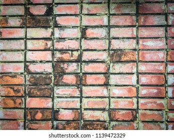 red brick wall texture background. Lichen stain on brick wall.