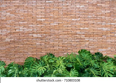 red brick wall texture grunge background with ornamental plants below, may use to interior design. copy space.