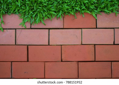 Red Bricks with green grass wallapaper background