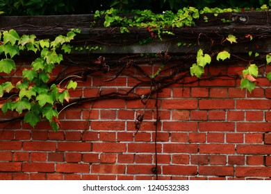Red Bricks Wall in Garden