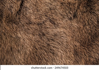 Red Brown Grey Wolf, Fox, Bear Fur Natural, Animal Wildlife Concept and Style for Background, textures and wallpaper. / Close up Full Frame.
