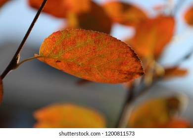 red and brown leaves on the street and at trees in Nieuwerkerk aan den IJssel during the autumn season in the Netherlands.