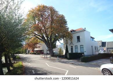 red and brown leaves on the street and at chestnut tree in Nieuwerkerk aan den IJssel during the autumn season in the Netherlands
