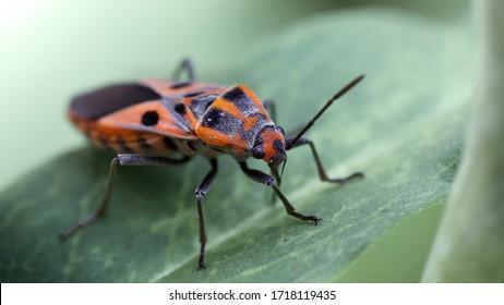 red bug on a leaf
