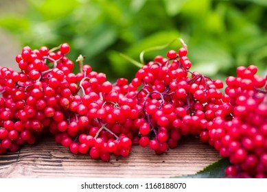 Red bunches of red elderberry (Sambucus) on a wooden surface. Preparation of medicinal natural means
